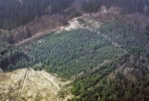 Luftaufnahme einer Viereckschanze aus der Latènezeit in Dornstadt, Kreis Donau-Ries. Die Ecke am rechten Rand ist gut sichtbar. Hier wurde der Wald vor Kurzem aufgeforstet. (Foto: Bayerisches Landesamt für Denkmalpflege, Klaus Leidorf)