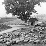 Die Echardinger Kapelle auf einer Bildpostkarte der 30er Jahre.