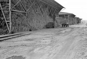 Die riesigen Flachsscheunen des Zwangsarbeitslagers Lohhof (Foto: Peter Vahlensieck)
