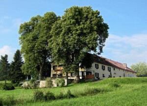 Die idyllisch gelegene Kreut-Alm. (Foto: Berggasthof Kreut-Alm)