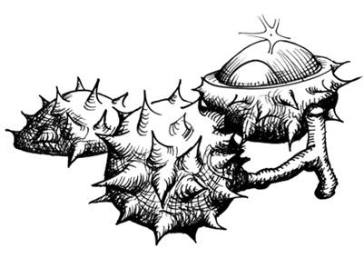 Nur zwei Buchstaben machen im Bairischen den Unterschied zwischen Kersch und Keschn. Im Jahresverlauf kommen sie sich saisonal aber nicht in die Quere: Erstere versüßen den Sommer, während Letztere zur Winterzeit als geröstete Maroni heißbegehrt sind.